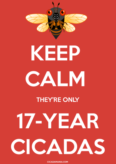 Keep Calm, They're Only 17-Year Cicadas