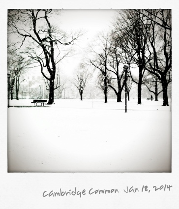 Snow on Cambridge Common