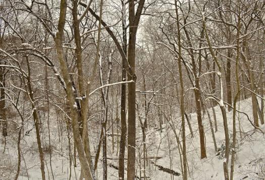 Snowy Wood3